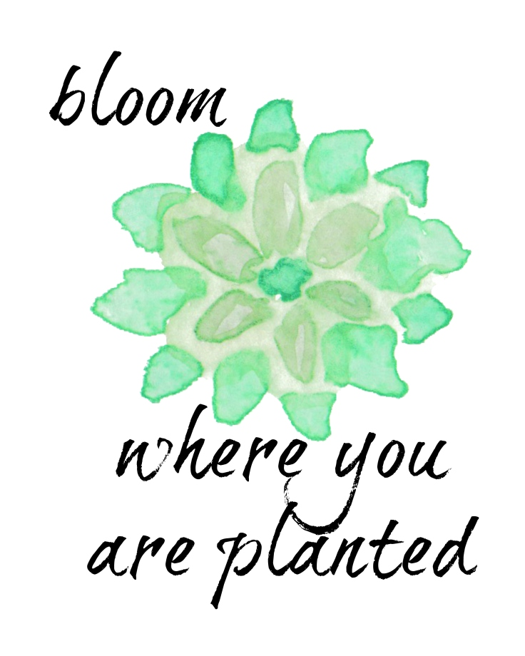 BloomSucculent.jpg